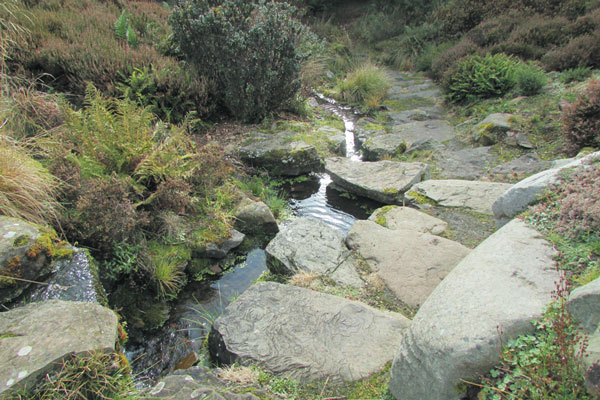 City Life Dundee – The University of Dundee Botanic Gardens