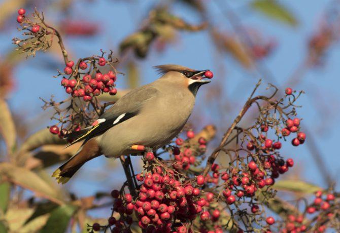Trees to Feed the Birds